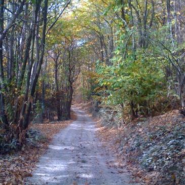 natura-bosco-sentiero-px